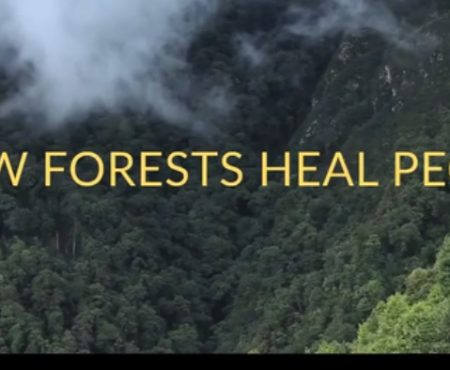 Carry a Forest in your Heart